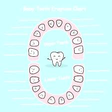 Teething Chart Babies Tooth Chart Baby Teeth Novadev Co