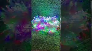 Dây đèn led 100m-800 bóng giá sỉ 280k. - YouTube