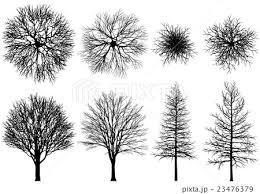木 冬枯れ 俯瞰 ベクター のイラスト素材 23476379 Pixta