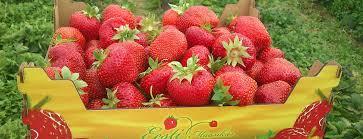 Maasikakasvatusest - seemnemaailma lugemissaal