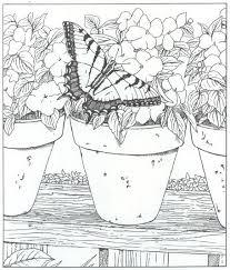 Vlinder Kleurplaat Jouwkleurplaten