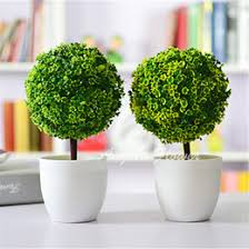 Decorative Plants For Home