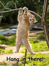 Cat Stock Quote Amazing Amazon Hang In There Baby Cat Retro Motivational Framed Poster