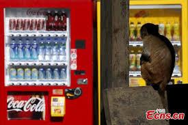 Monkey Vending Machine Unique Monkeys Roam Free In Hong Kong 48 People's Daily Online