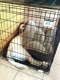 dog crate bedding set dog crate under bed sleeping under the bed a new one dog