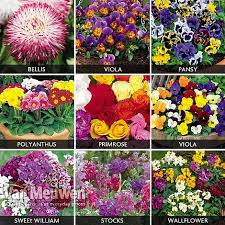 beau spring bedding plants spot and