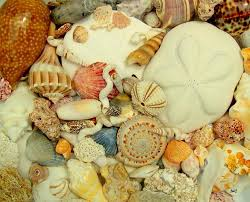 My Seashell Collection New Englands Narrow Road