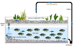 how to build a hydroponic garden. how to build a hydroponic system with fish tank gardening ideas garden