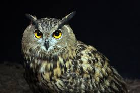 Image result for owl photos