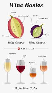 Wine Basics A Beginners Guide To Drinking Wine Wine Folly