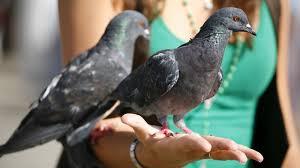 Ptaki zimujące w polsce i odlatujące