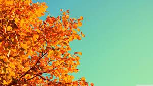 Fall Aesthetic Wallpaper 2560×1440 ...