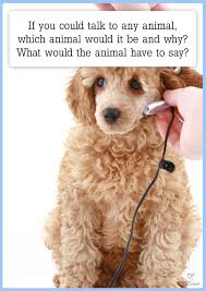 you could talk to any animal creative writing prompt if you could talk to any animal creative writing prompt