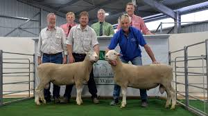 Producer focus pays for Woolumbool   Stock Journal   South Australia