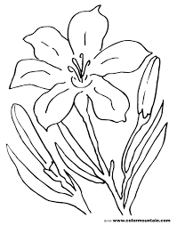 Coloring Pictures Of Easter Lilies