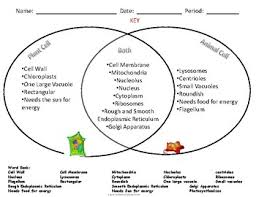 Venn Diagram Plants Comparing Plant And Animal Cells Venn Diagram Under