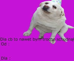 Pin by Ada Brummer on memiozo   Reaction pictures, Cute dogs, Cute pictures