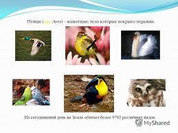 Презентация на тему ПТИЦЫ Доклад подготовлен ученицей А  2 Пти́цы лат aves животные тело которых покрыто перьями лат На сегодняшний день на Земле обитает более 9792 различных видов