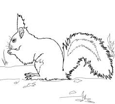 Red Squirrel Coloring Page Free Printable Coloring Pages