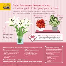 bouquets infographic cat poisoning indoor plants infographic