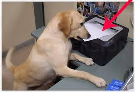 Dog Receipt Dog Knows How Do The Job Very Well