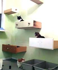 wall mounted cat shelves cat wall stairs cat wall perch cat shelves cat wall shelves wall wall mounted cat shelves image 0 diy