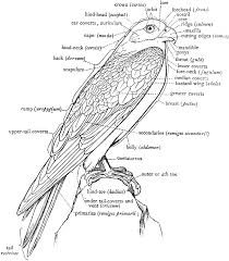 Clipart Birds Body Graphics Illustrations Free Download On