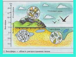 Презентация по географии на тему Биосфера класс  Закономерности распространения живых организмов изучает наука № слайда 3
