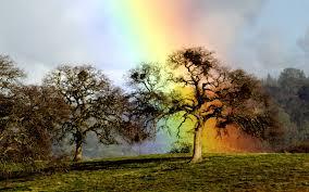Near At Rainbow 1920 X 1200 Nature Photography Miriadna Com
