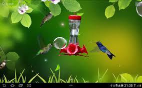 free live wallpaper hummingbirds wallpaper colibries live wallpaper