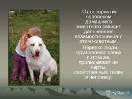Презентация на тему Взаимоотношение животных с человеком  5 От восприятия человеком домашнего животного