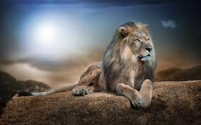 roaring lion wallpaper hd 1080p. Fine Lion HD Wallpaper  Background Image ID487131 In Roaring Lion Hd 1080p A