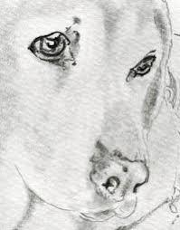 犬の描き方写実的 くるみ鉛筆画教室