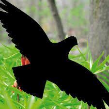 5 Aufkleber Schwarz 25cm Vogel Fenster Glas Vogelschutz Vogelabwehr