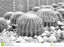 Cactus Succulent Landscape Design Succulent Plants With Thorny Spines Stock Photo Image Of