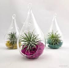 terrific pear shaped hanging glass terrarium container