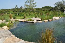 Swimming Pool:Nature Garden Pools And Swimming Ponds Design Idea Natural  Swimming Pond With Beautiful
