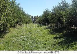 tall green grass field. Path Of Tall Grass - Csp44881370 Green Field
