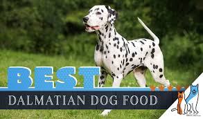 6 Best Dalmatians Dog Foods Plus Top Brands For Puppies And