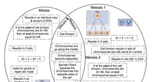 Venn Diagram Comparing Meiosis And Mitosis Meiosis Vs Mitosis Venn Diagram Magdalene Project Org