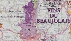 Find The Vine Wine Region Beaujolais