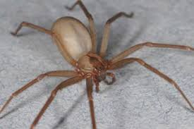 Arizona Spiders Identification Chart Types Of Spiders Spider Facts Live Science