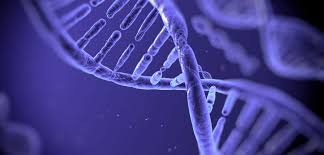 ผลลัพธ์รูปภาพสำหรับการถ่ายทอดทางพันธุกรรม