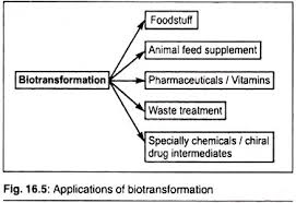 essay on environmental biotechnology essay 3 bioremediation environmental
