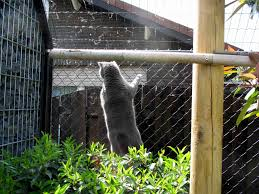 Katten Omheining Tuin Glmc