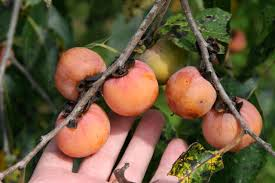 What To Plant To Attract DeerBest Fruit Trees For Deer