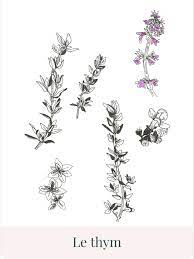 Check spelling or type a new query. Illustration Plante Infusion