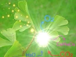 Реферат по биологии Фотосинтез
