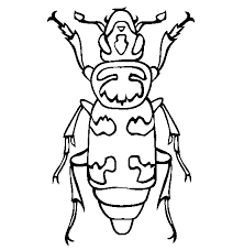 Small Picture Dung Beetle coloring page Animals Town Free Dung Beetle color