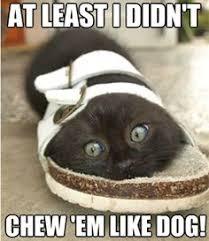 Animal Memes on Pinterest | Grumpy Cat, Cats and Grumpy Dog via Relatably.com